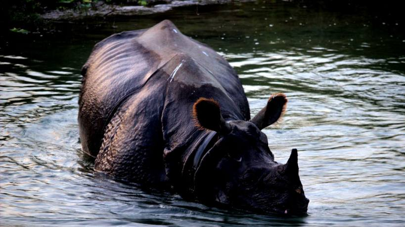 2 nights 3 days Chitwan Safari