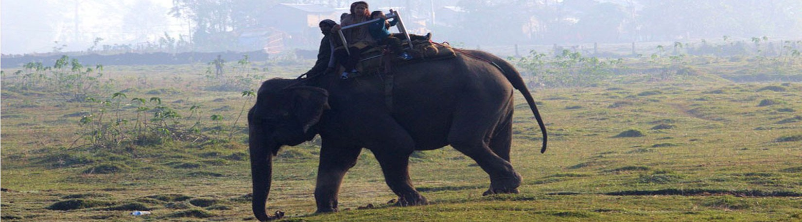 Elephant Riding at Chitwan National Park